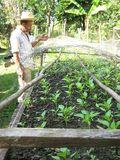 Burton Caliz seedlings