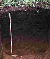 Terra Preta soil
