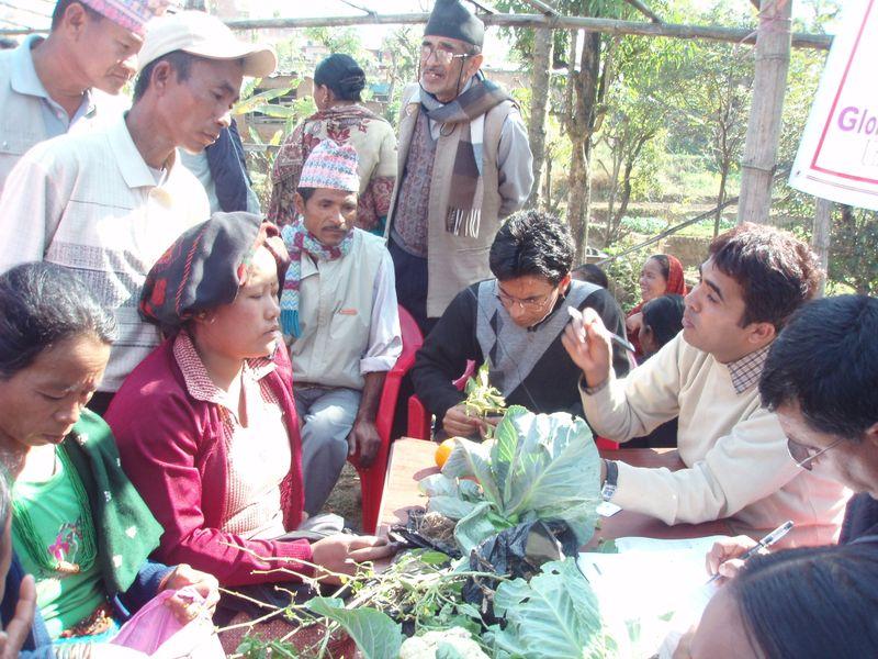 Khatiwada - One of plant doctor Mr. Rambhakta Neupane is providing technical services to farmers, Photo by Bed. P. Khatiwada