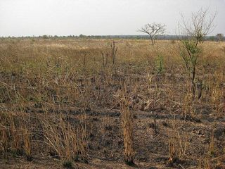 Marginal land in Ghana, photo by Frank van  Schoubroeck